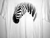 zebra-far-away